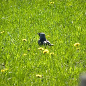 Fugl En allike på en grøn eng